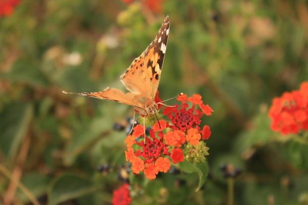 pristna flora in favna